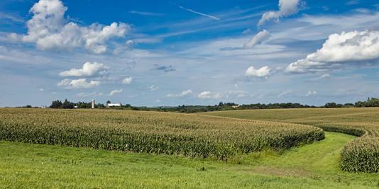 Midwest corn field